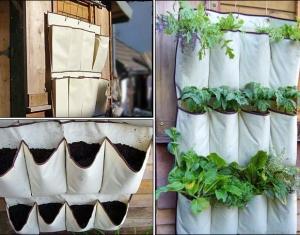 plantando_sapateira
